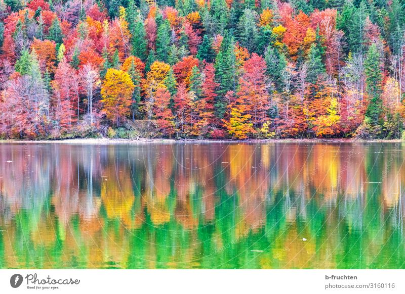 Colourful autumn forest with reflection in the water Vacation & Travel Trip Mountain Hiking Nature Landscape Autumn Beautiful weather Plant Tree Leaf Forest