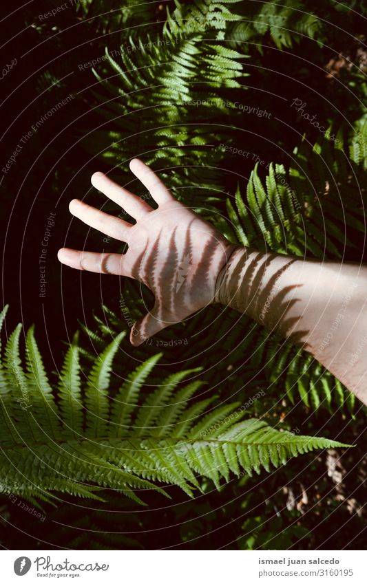 man hand in the shadows in the nature Human being Nature Plant Green Hand Street Body Skin Arm Fingers Symbols and metaphors Conceptual design Minimalistic