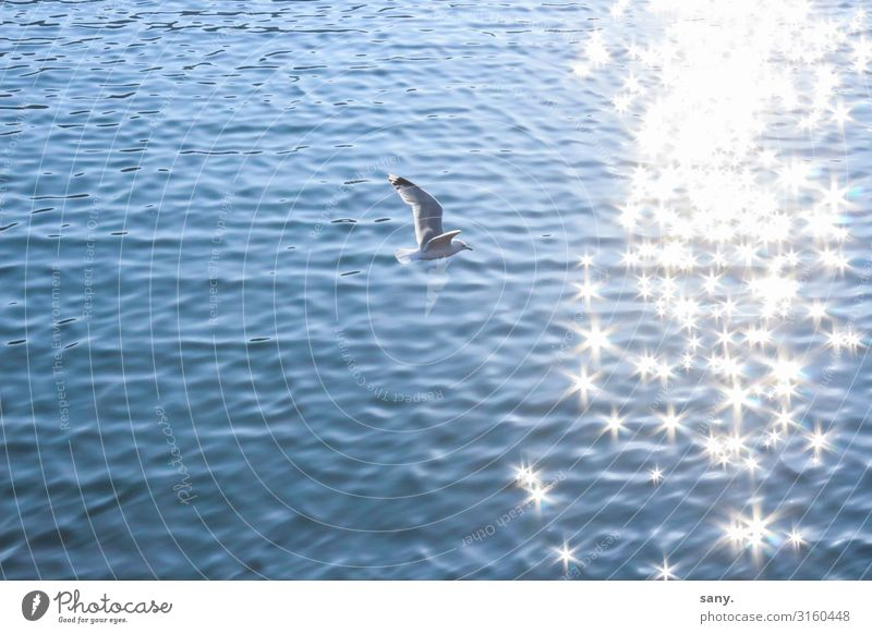seagull Nature Water Beautiful weather Waves North Sea Ocean Animal Wild animal Bird Wing 1 Flying Natural Contentment Joie de vivre (Vitality) Freedom