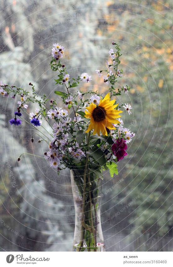 Sunflower at the window Living or residing Flat (apartment) Decoration Thanksgiving Environment Nature Summer Autumn Plant Aster autumn flowers Garden Window
