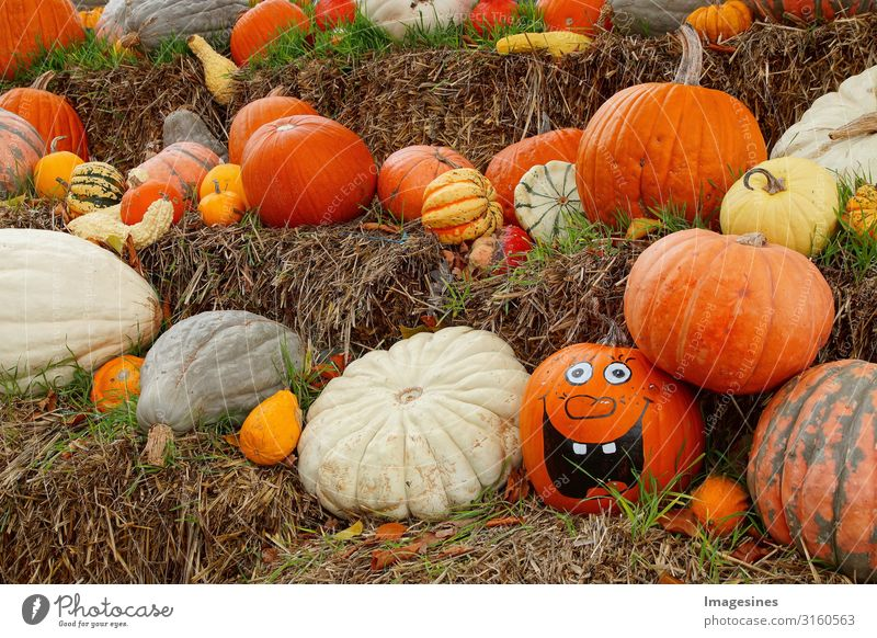 Pumpkin Family - Happy Halloween Food Vegetable Pumpkin time Pumpkin plants Nutrition Organic produce Vegetarian diet Diet Nature Autumn Brash Creepy Delicious