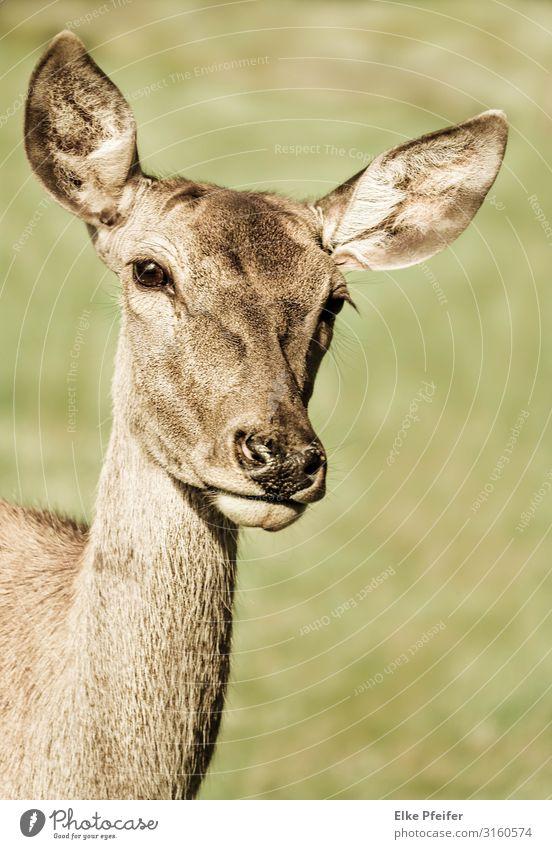 Rotwild Nature Animal Moody Wild Free Elegant Wild animal Power Cute Serene Sympathy