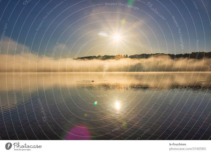 Morning mood at the lake Nature Landscape Water Sun Sunrise Sunset Autumn Fog Lakeside Relaxation To enjoy Looking Hiking Free Fresh Optimism Idyll Change