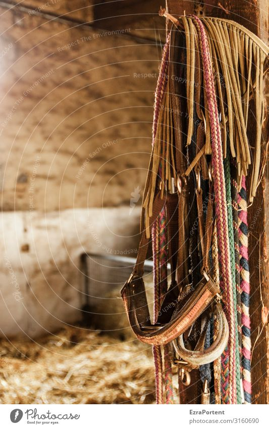 Hü and Hott House (Residential Structure) Wall (barrier) Wall (building) Brown Barn Rope Straw Many Hang Colour photo Interior shot Deserted Day