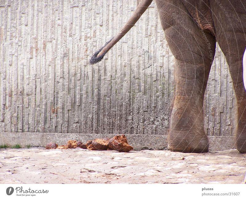 Business done! Elephant Zoo Swinishness Manure heap Feces