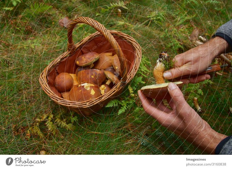 Mushrooms in basket Food Vegetable Nutrition Lifestyle Mushroom picker mushroom pick Human being Masculine Hand 1 45 - 60 years Adults Environment Nature Forest