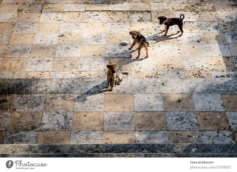 Puppies chess Vacation & Travel Tourism Adventure Far-off places Sightseeing City trip Summer Tourist Attraction Animal Pet Dog 3 Group of animals Baby animal