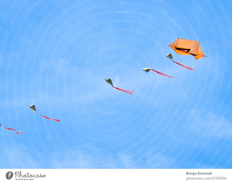 Many beautiful, colourful kites, flying in the blue sky Joy Leisure and hobbies Playing fly a kite Sports Subculture Event Nature Sky Flag Kite Observe Flying