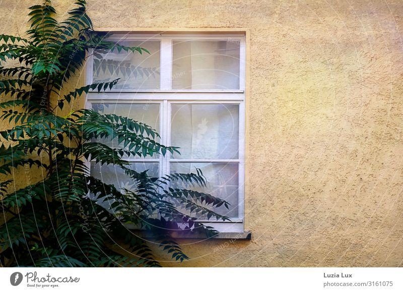 At the window Town House (Residential Structure) Wall (barrier) Wall (building) Window Yellow Green Colour photo Subdued colour Exterior shot Deserted