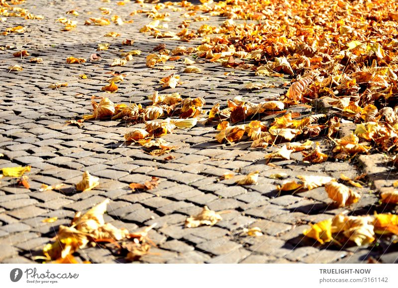 Dry leaves on paving stones in the autumn sun Environment Nature Autumn Beautiful weather Autumn leaves Old town Marketplace Street Paving stone Pavement Brown