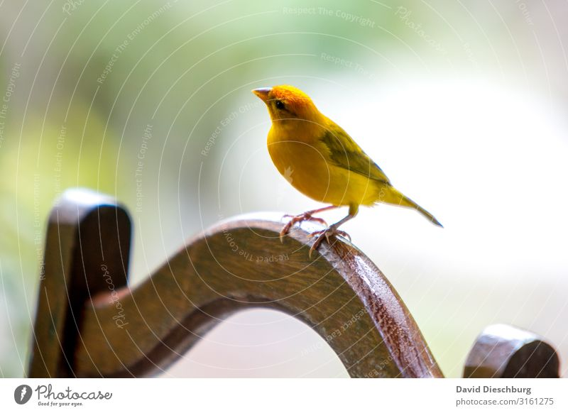 Vacation & Travel Nature Ocean Animal Yellow Spring Bird Stand Feather Beautiful weather Wing Curiosity Exotic Virgin forest Expedition Interest