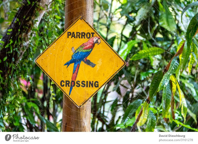 Vacation & Travel Nature Plant Blue Green Red Forest Yellow Bird Characters Wild animal Signs and labeling Adventure Beautiful weather Signage