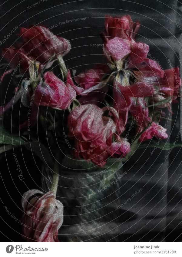 Flowers always go Painting and drawing (object) Environment Nature Tulip Vase Glass Pink Disappointment Exhaustion Decline Past Transience Lose Faded Bouquet