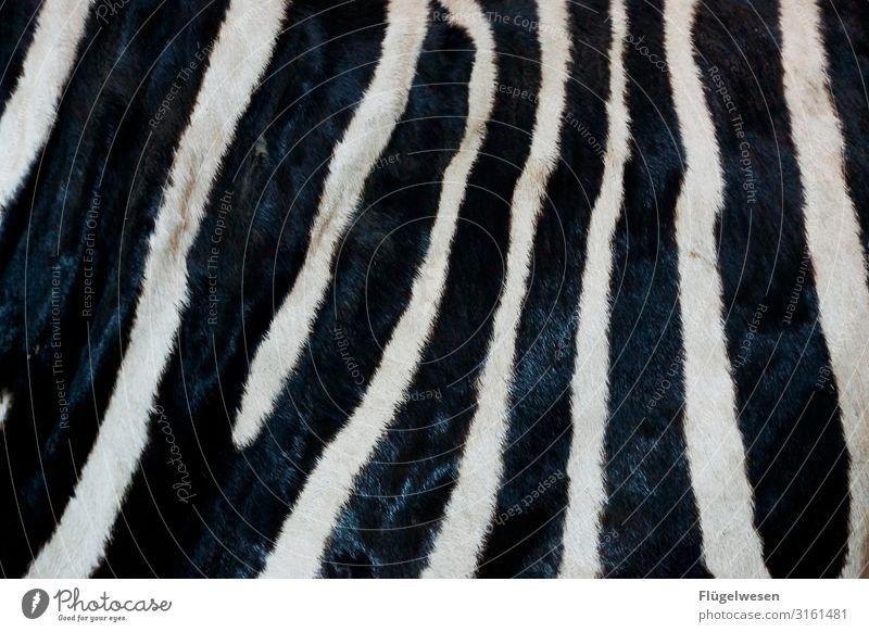 abracazebra Zebra crossing Animal Pattern Pelt Striped