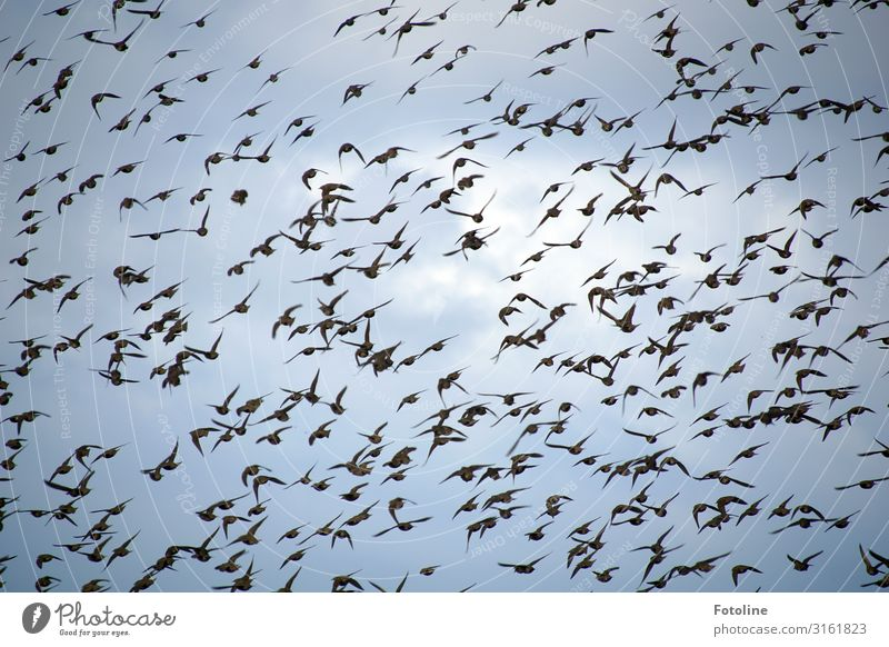 Sky Nature Blue White Clouds Animal Black Environment Natural Bird Flying Free Air Wild animal Elements Many