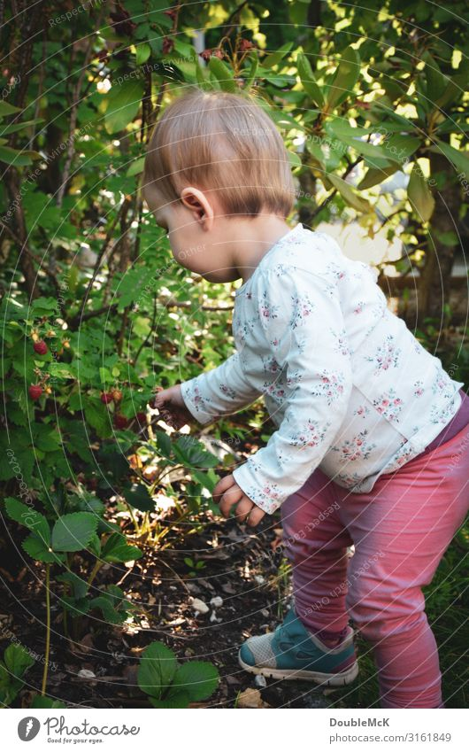 Girl picks raspberries from a bush in the garden Human being Feminine Child Toddler girl Infancy Body Back by hand Fingers 1 1 - 3 years Summer Plant bushes