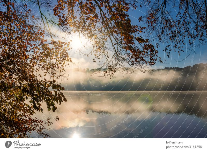 Autumn morning at the lake Contentment Vacation & Travel Nature Sunrise Sunset Sunlight Fog Plant Leaf Forest Lakeside Going To enjoy Hiking Calm Morning fog