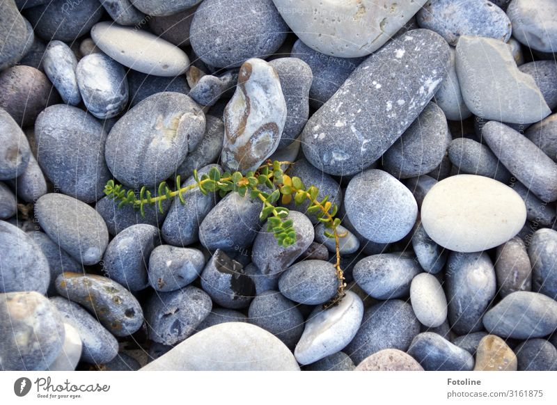 Little Fighter Environment Nature Plant Elements Wild plant Coast Beach North Sea Island Natural Gray Green White Stone Stony Pebble beach beach queen