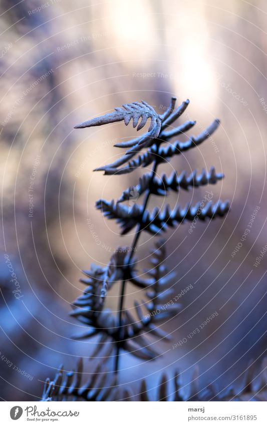 Nature Plant Loneliness Dark Autumn Cold Natural Sadness Ice Dream Esthetic Authentic Uniqueness Mysterious Frost Serene