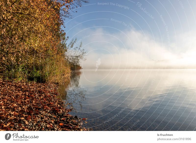 Wallersee/Austria in autumn Well-being Calm Vacation & Travel Tourism Freedom Hiking Environment Nature Landscape Clouds Autumn Beautiful weather Fog Tree