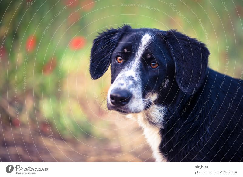 sitting waiting Flower Park Meadow Dog 1 Animal Observe Listening Wait Fragrance Bravery Honest Respect Puppydog eyes Dog's snout Colour photo Copy Space left