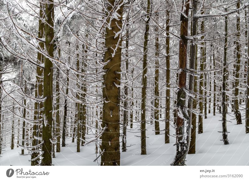 perseverance Nature Landscape Winter Forest Calm Cold Climate Environment Winter forest Winter mood Winter's day Tree trunk Colour photo Subdued colour