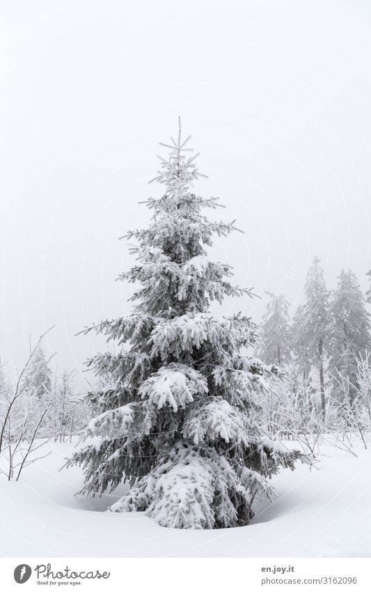 is also beautiful Nature Landscape Sky Winter Bad weather Fog Ice Frost Snow Tree Fir tree Coniferous trees Cold White Climate Winter forest Winter mood