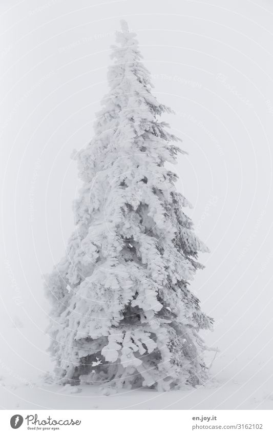 soon... Nature Weather Bad weather Fog Ice Frost Snow Tree Coniferous trees Fir tree Cold White Climate Winter Christmas & Advent Christmas tree Winter forest