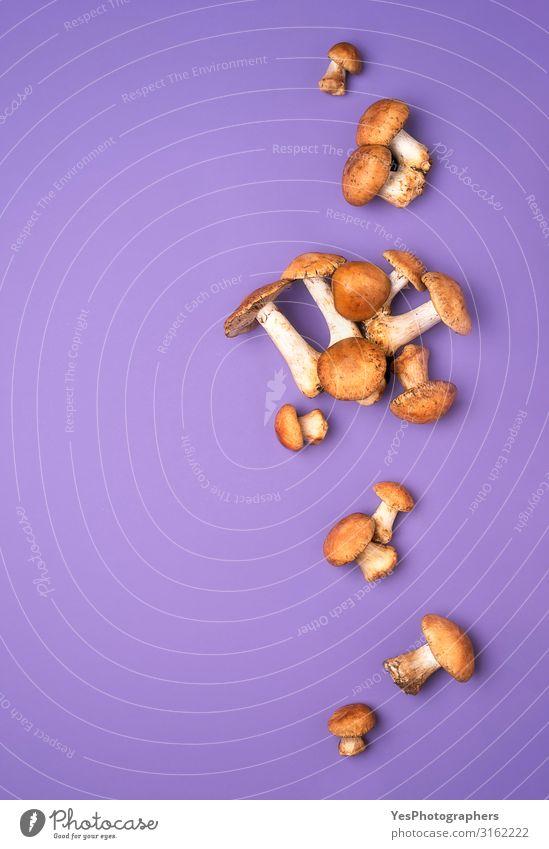 Autumn wild mushrooms on purple tabletop. Edible honey fungus Vegetable Organic produce Vegetarian diet Healthy Eating Fresh Delicious Natural
