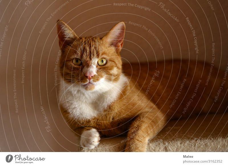 Beautiful red cat Photographer Cat Domestic cat Camera Red Animal Cat eyes Kitten Funny Pet Sweet Eyes