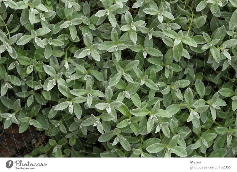 Young green shoots in the garden Background picture Beautiful Garden Green Nature Leaf Shoot Spring Foliage plant Summer Close-up Plant