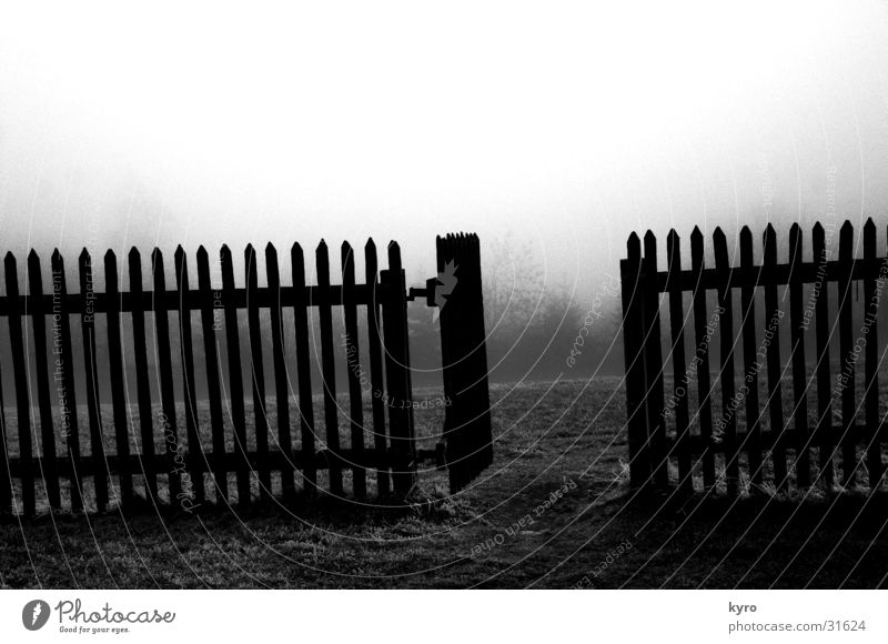Sky Tree Dark Cold Meadow Grass Mountain Garden Wood Gray Door Fog Lawn Gate Deep Fence