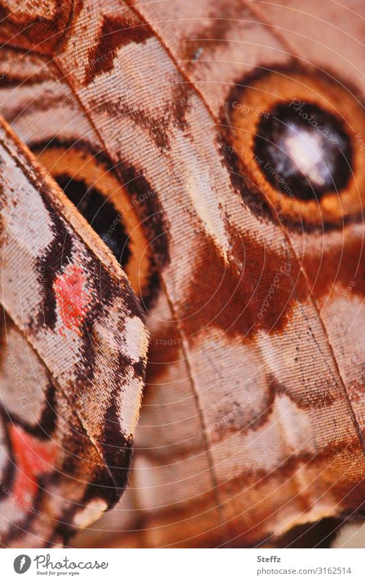 Nature Summer Beautiful Environment Eyes Natural Orange Brown Design Line Esthetic Wing Circle Near Butterfly Symmetry
