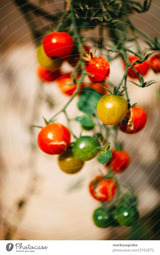 fresh organic tomatoes Food Vegetable Tomato tomato bush Bush tomato Nutrition Organic produce Vegetarian diet Diet Fasting Slow food Finger food Healthy