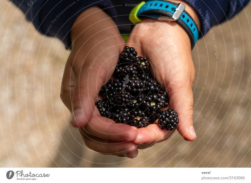 A helping of blackberries, please. Fruit Blackberry Nutrition Organic produce Vegetarian diet Finger food healthy fruit Picked Joy Trip Parenting Child Hand 1