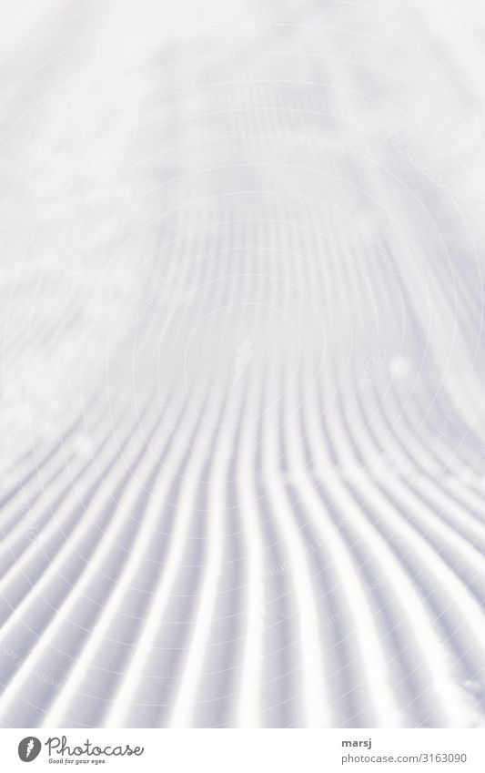 New week, fresh and untouched Ski run Winter Snow Furrow Simple Together Cold White Loneliness Pure Untouched Colour photo Subdued colour Exterior shot Abstract