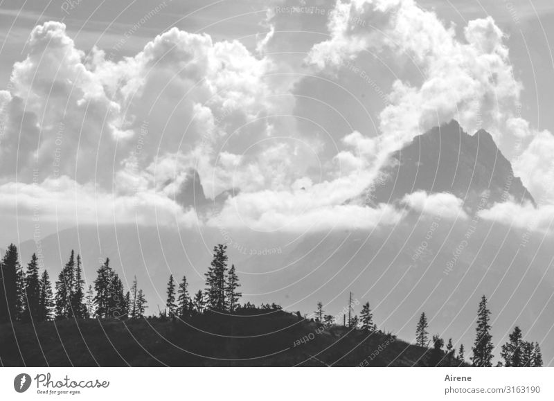 Clouds Mountains Hiking Sky Beautiful weather Alps Watzmann Peak Mountain forest Gigantic Tall Black White Joie de vivre (Vitality) Success Fear of heights