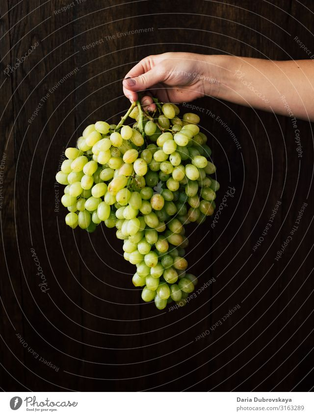 A big bunch of green grapes in the hand of a woman Sweet Fresh Juicy Healthy Dessert Food Nature Green Harvest Diet Mature vegetarian Vineyard Agriculture