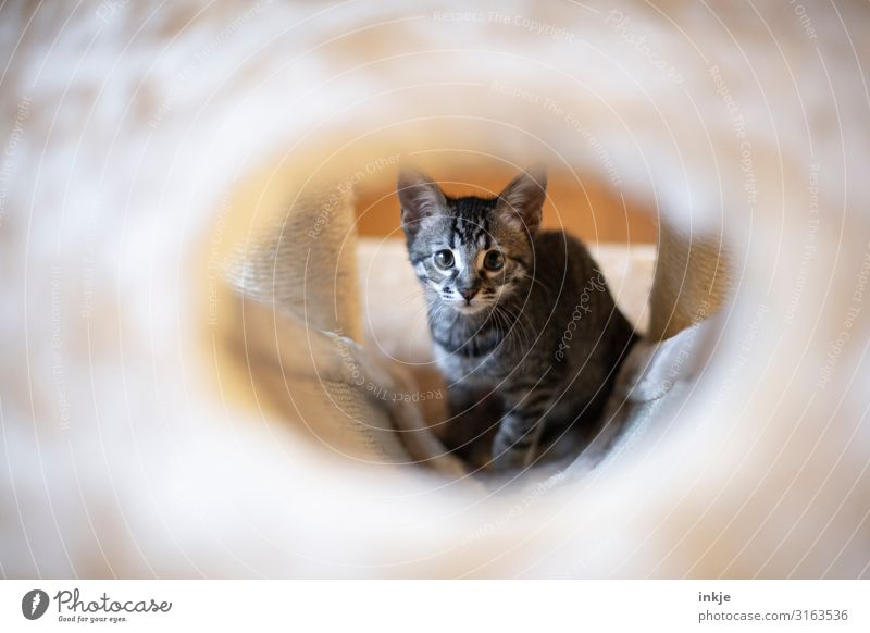 Emmy Pet Cat Animal face 1 Baby animal cat tree Looking Authentic Cute Innocent Vista Colour photo Subdued colour Interior shot Close-up Day Light Shadow