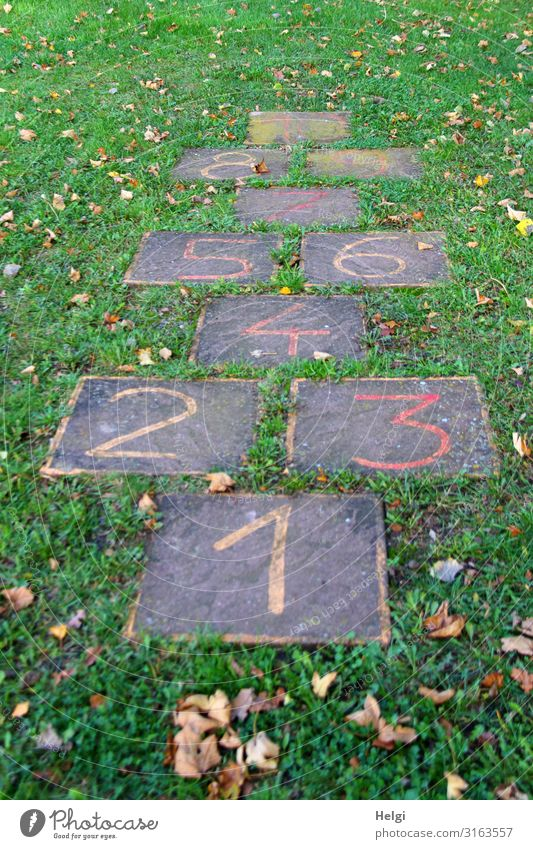 Stone slabs with painted numbers, jumping game for children on a meadow Environment Nature Plant Grass Leaf Playing Playing field Digits and numbers Exceptional