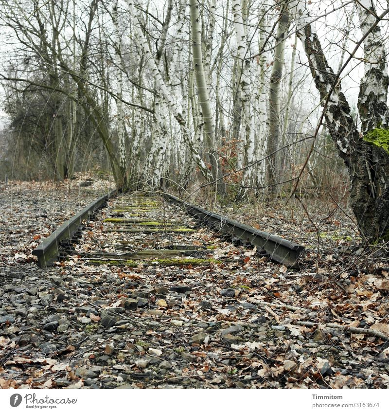 well Environment Nature Tree Birch tree Berlin Transport Rail transport Railroad system Stone Wait Broken Gray Green Emotions Lose End triangular track