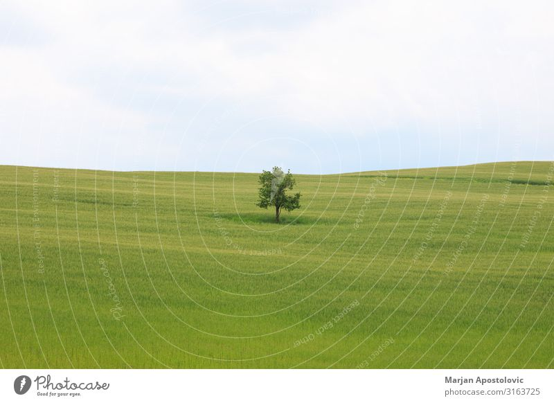 Single tree in green grass field Environment Nature Landscape Plant Horizon Spring Summer Tree Grass Meadow Field Tuscany Italy Europe Fresh Infinity Beautiful