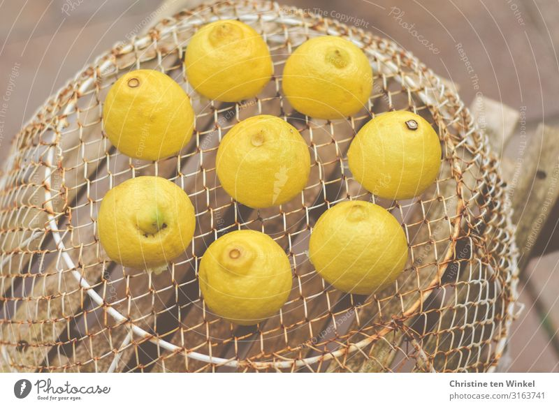 Lemons on a wire basket standing on a wooden chair Food Fruit Nutrition Basket Grating Wood Metal Lie Esthetic Exceptional Brash Happiness Fresh Healthy