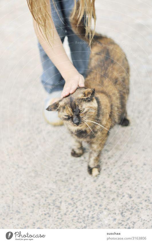 Cat caress Child Girl Domestic cat Pet Caress To enjoy Hand Pelt Cozy Love Like Love of animals Life Joie de vivre (Vitality) Purr Whisker Paw