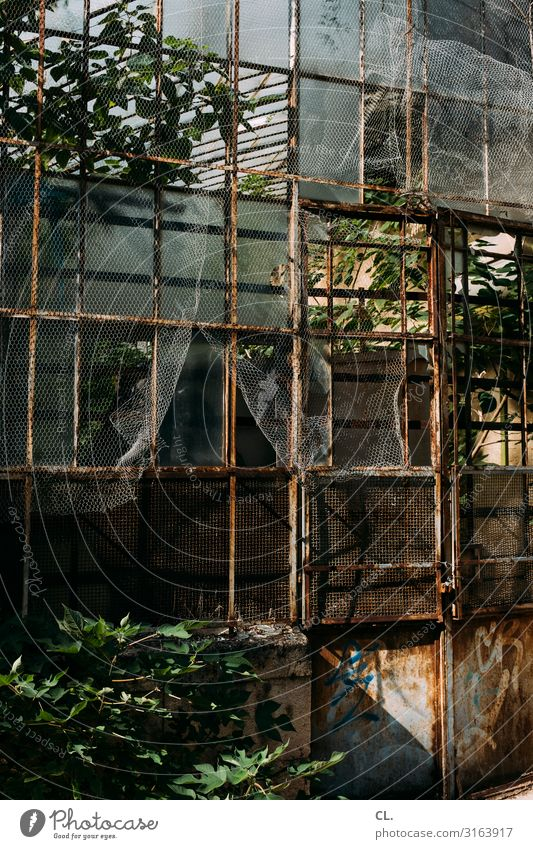 greenhouse Environment Nature Plant Exotic Park Greenhouse Old Esthetic Decline Transience Growth Change Time Destruction Rust Botanical gardens Botany