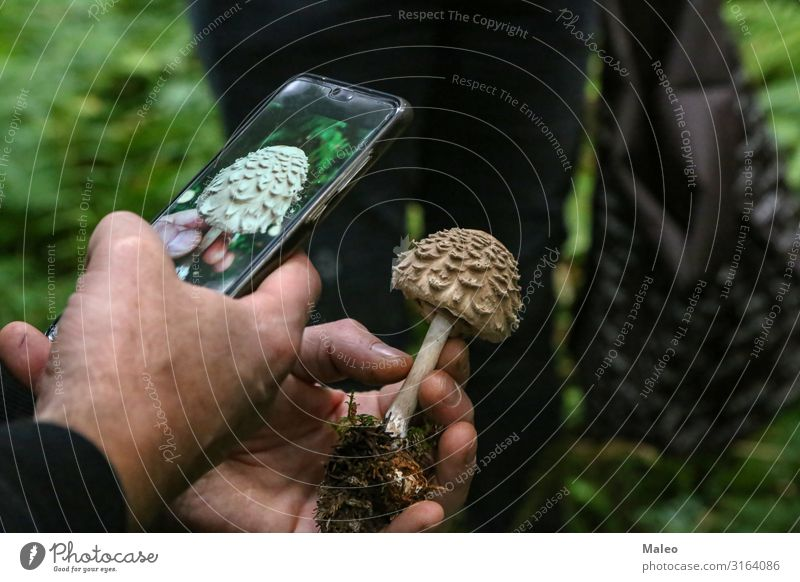 Mushroom picker photographs an unknown mushroom Brown Photography Pick Organic produce Autumn Accumulate Edible Nature Forest Food Human being