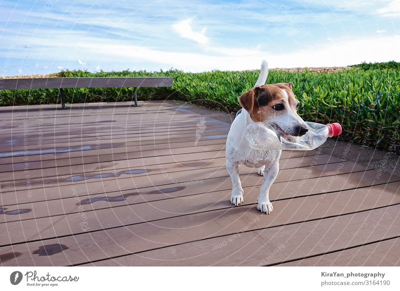 Cute dog holds plastic bottle Nature Dog Summer White Beach Environment Funny Playing Friendship Earth Friendliness Clean Plastic Pet Trash