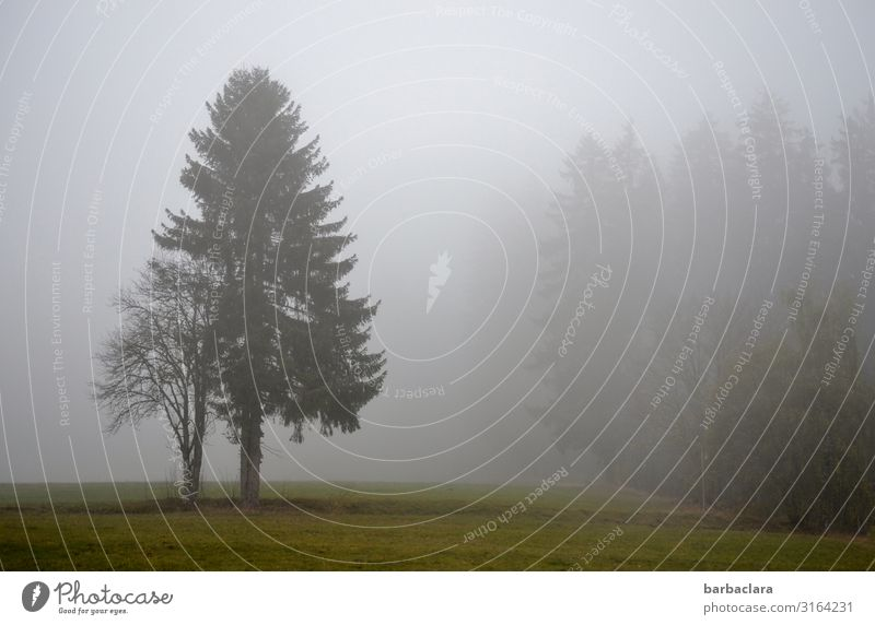 Nature Landscape Tree Forest Autumn Environment Cold Emotions Gray Moody Fog Field Stand Climate Change Elements