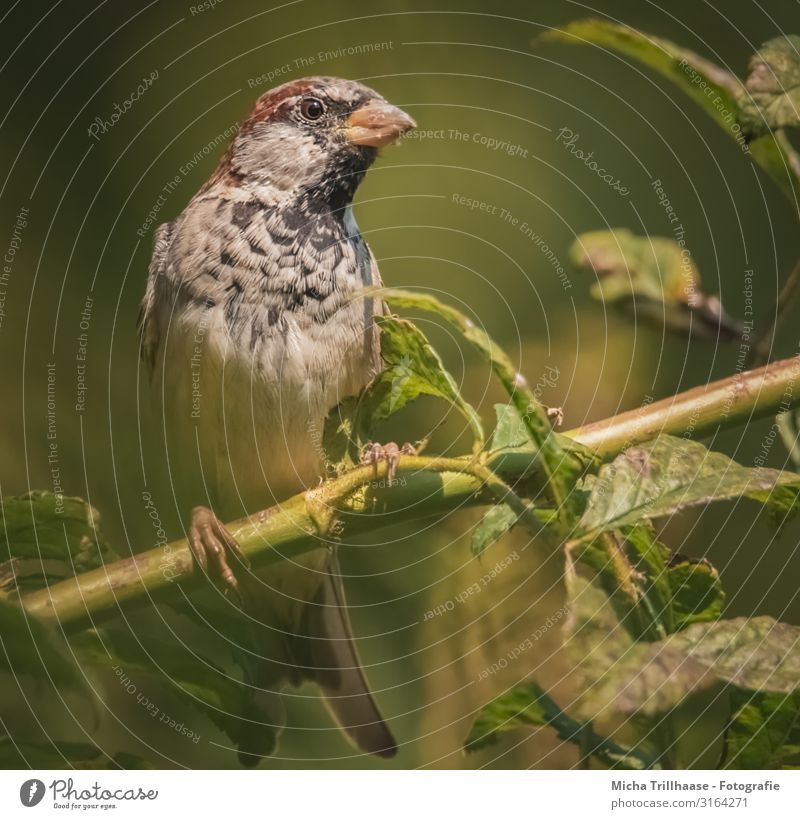 Curious Sparrow Nature Animal Sun Sunlight Beautiful weather Plant Tree Twigs and branches Wild animal Bird Animal face Wing Claw Passerine bird Head Beak Eyes