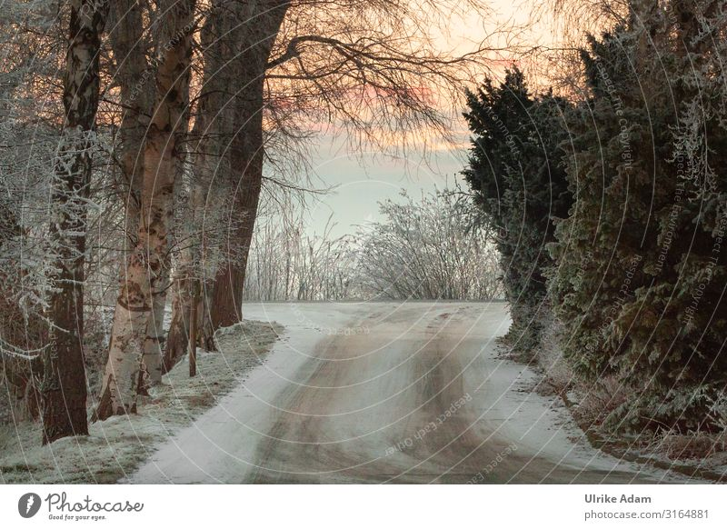 Winter Winter vacation Wallpaper Christmas & Advent Nature Landscape Sunrise Sunset Ice Frost Snow Flower Freeze Cold Calm Hoar frost Lanes & trails Tracks